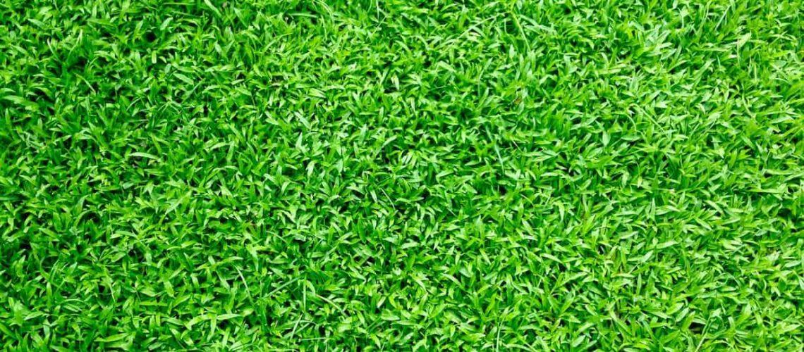 bästa gräsfrö